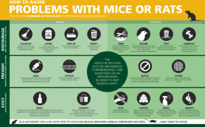 Preventing rats on your property