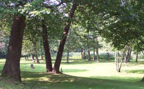 Squantum Woods