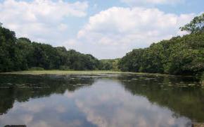 Willett Avenue Pond