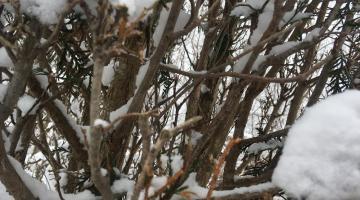 """""""March Snow"""" by Amberlynn"""