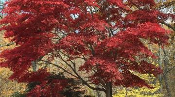 """Fall foilage at Hunts Mills Rumford"" by Dan"